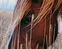 Subasio Horses
