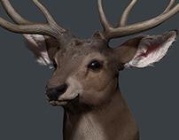 Deer Character Desing