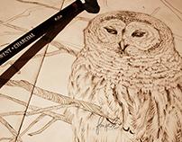 An Owl: Always Watching