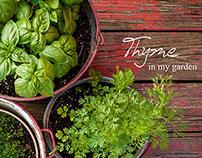 Thyme in my garden