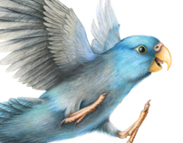 Pacific Parrotlet (Forpus coelestis) with making of