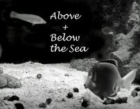 Above and Below the Sea