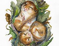 Hibernation : Dormouse