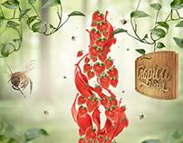 Tropica Berry Ads Campaign
