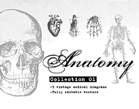 Anatomy Collection 01