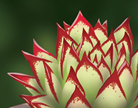Illustration – Echeveria agavoides 'Lipstick'