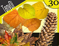 Autumn Leaves & Pine Cones | Bundle