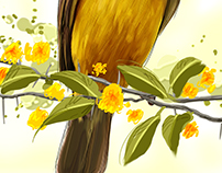 BRAZILIAN BIRDS