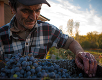 Wine Making in Moldova