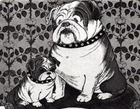 Bulldog, Westie / Carin, Poodle
