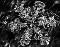 Macro Snowflake Photos