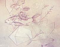 cd geometrica