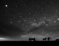 Patagonia's last wild horses