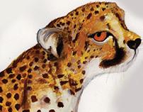 Mia the Cheetah