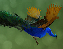 Peehu, 3D Model of a Peacock