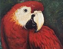 Guacamaya Parrot