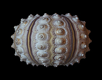 Urchin shell macro photography