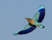 A Journey with birds in UAE
