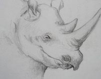 my old sketching . . .