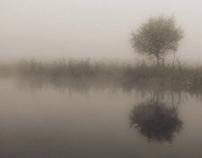 foggy and myst