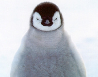 NAA Submission - PFLAG Penguins