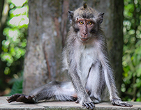 Kecak, Macaques and Sunsets