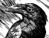 MURDERBIRDS, In ink.