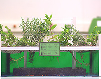 Hydroponic School Garden Unit