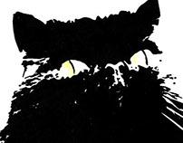 Jin - The Cat