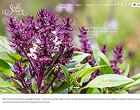 Seed To Serum Website (in progress)