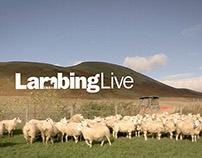 Lambing Live 2013