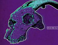 Cráneo ( ilustración.)