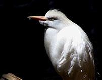 Tulsa Zoo Photography