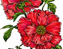 Flowers, botanical illustration