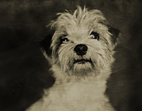 Lumiere Tintype Photobooth - Dog Portraiture