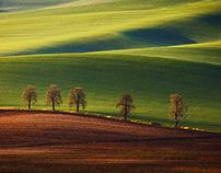Blooming Moravia