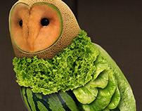Healthy Owl
