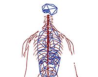 Anatomy -human-