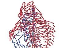 Anatomy -fish-