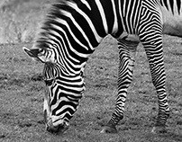 photography from chester zoo