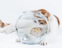 PET INSURANCE / CAT