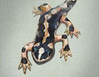 Lorestan's Salamander