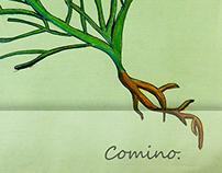 Plantas Medicinales. Buenos colores