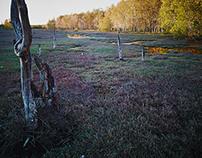 Oz waterlands