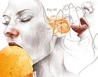 Palmera de huevo - Revista LAMUY