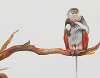 Vietnam primates in art