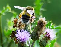 Collect pollen