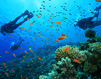 Tips for Safe Scuba Diving