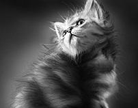 The Kitten Ipad Drawing