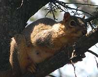 Secrete Squirrel